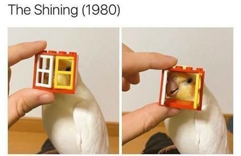 Joint - The Shining (1980)
