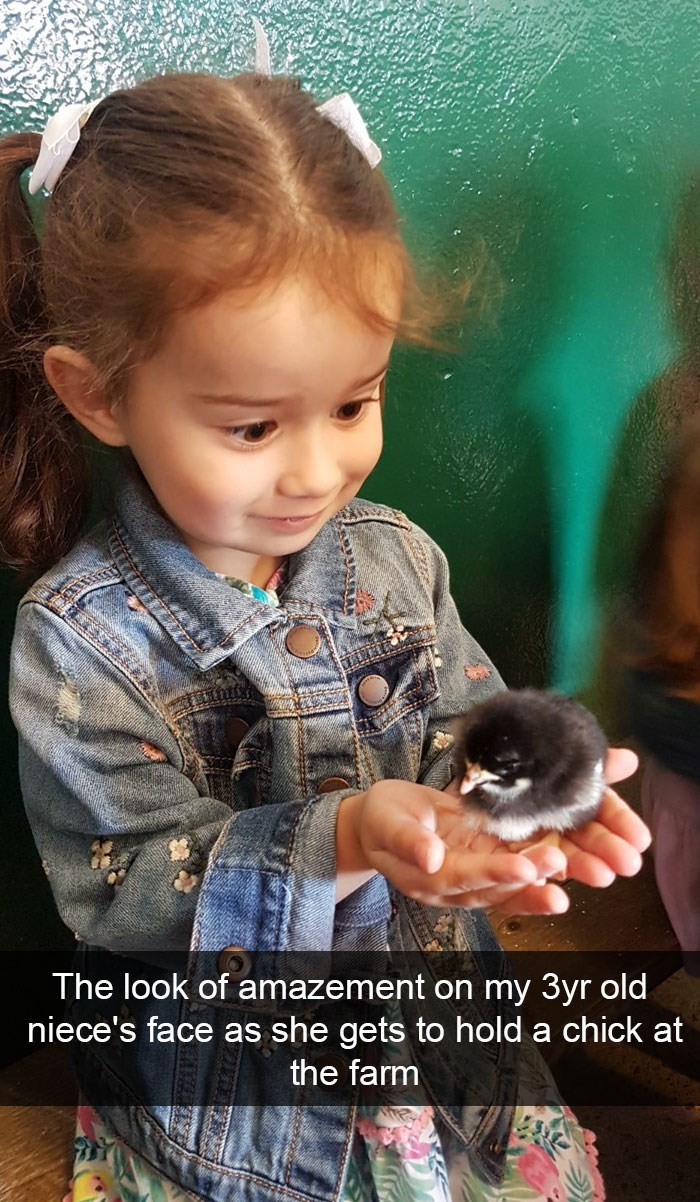 Child - The look of amazement on my 3yr old niece's face as she gets to hold a chick at the farm