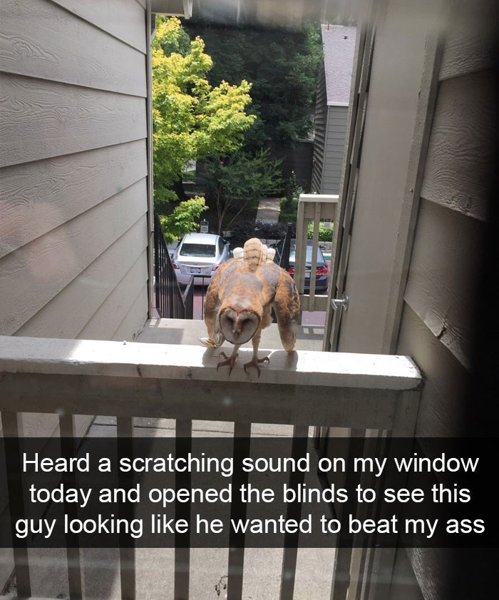 Window - Heard a scratching sound on my window today and opened the blinds to see this guy looking like he wanted to beat my ass