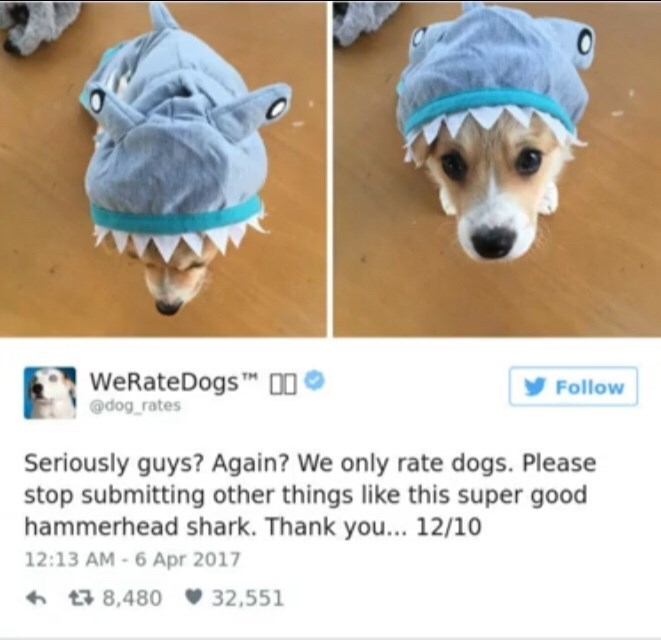 "Tweet from We Rate Dogs That reads, ""Seriously guys? Again? We only rate dogs. Please stop submitting other things like this super good hammerhead shark. Thank you...12/10"" below a photo of a cute corgi wearing a shark hat"