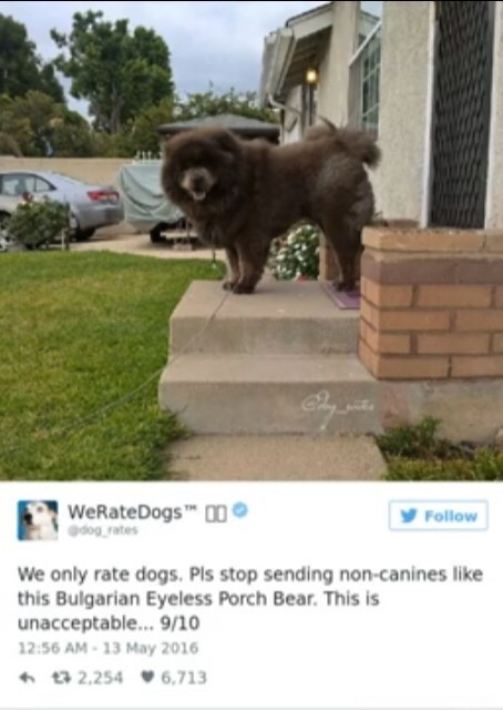 Dog - WeRateDogs dog rates Follow We only rate dogs. Pls stop sending non-canines like this Bulgarian Eyeless Porch Bear. This is unacceptable... 9/10 12:56 AM-13 May 2016 t2,254 6,713