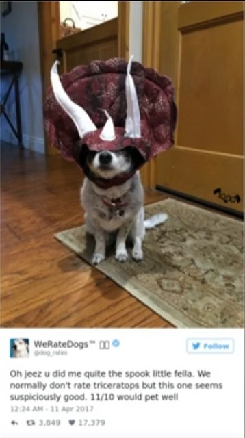 "Tweet from We Rate Dogs that reads, ""Oh jeez u did me quite the spook little fella. We normally don't rate triceratops but this one seems suspiciously good. 11/10 would pet well"" below a photo of a cute dog wearing a triceratops hat"