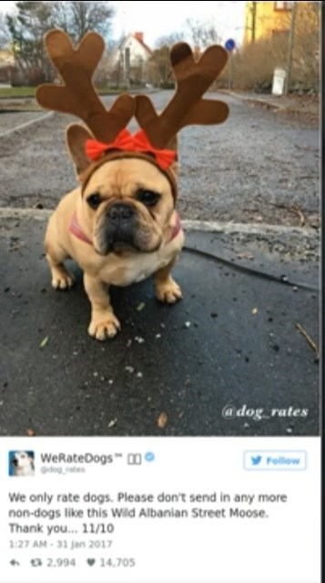 "Tweet from We Rate Dogs That reads, ""We only rate dogs. Please don't send in any more non-dogs like this Wild Albanian Street Moose. Thank you...11/10"" below a photo of a cute French Bulldog wearing reindeer antlers"