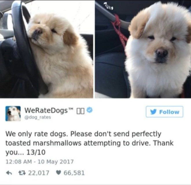 Dog - WeRateDogs D0 @dog rates Follow We only rate dogs. Please don't send perfectly toasted marshmallows attempting to drive. Thank you... 13/10 12:08 AM-10 May 2017 t22,017 66,581