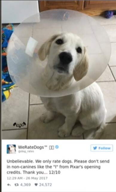 "Dog - WeRateDogs 0 Follow Unbelievable. We only rate dogs. Please don't send in non-canines like the """" from Pixar's opening credits. Thank you... 12/10 12 29 AM-26 May 2017 4,369 24,572"