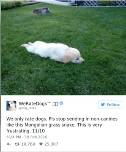 Mammal - WeRateDogs O dog rates Follow We only rate dogs. Pls stop sending in non-canines like this Mongolian grass snake. This is very frustrating. 11/10 6:24 PM-19 Feb 2016 10,769 25,307