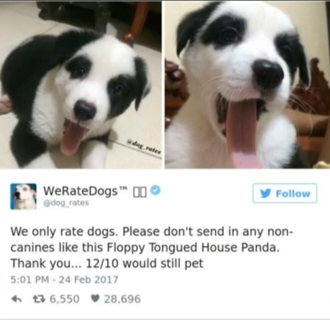 Mammal - dog rates WeRateDogs 0 Follow @dog rates We only rate dogs. Please don't send in any non- canines like this Floppy Tongued House Panda. Thank you... 12/10 would still pet 5:01 PM-24 Feb 2017 28,696 t6,550