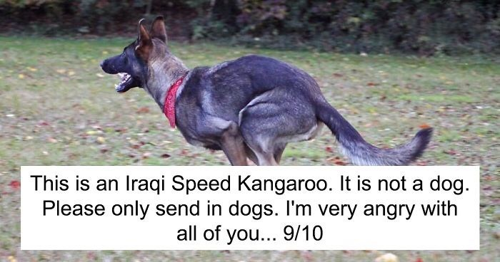 Vertebrate - This is an Iraqi Speed Kangaroo. It is not a dog Please only send in dogs. I'm very angry with all of you... 9/10