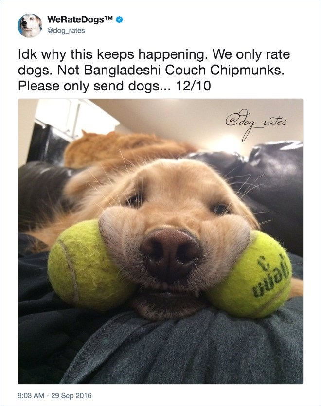 Tennis ball - WeRateDogs TM @dog rates Idk why this keeps happening. We only rate dogs. Not Bangladeshi Couch Chipmunks. Please only send dogs... 12/10 ates Ijol 9:03 AM-29 Sep 2016