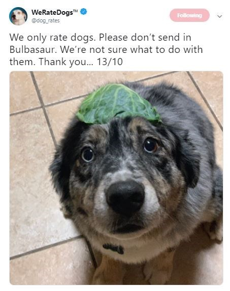Dog - WeRateDogs @dog rates Following We only rate dogs. Please don't send in Bulbasaur. We're not sure what to do with them. Thank you... 13/10