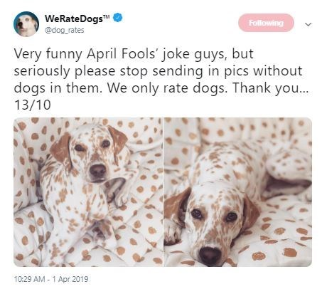 Dog - WeRateDogs @dog rates Following Very funny April Fools' joke guys, but seriously please stop sending in pics without dogs in them. We only rate dogs. Thank you... 13/10 10:29 AM 1 Apr 2019