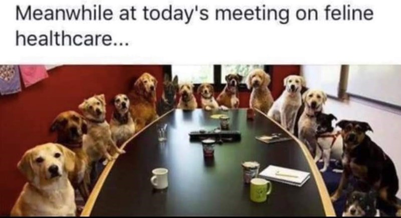 Dog breed - Meanwhile at today's meeting on feline healthcare...