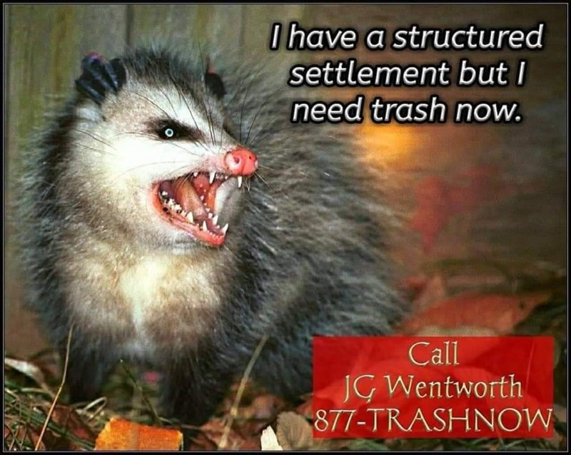 Mammal - 0have a structured settlement butI need trash now. Call JG Wentworth 877-TRASHNOW