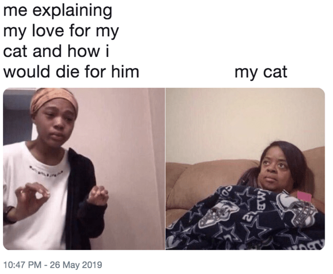 Face - me explaining my love for my cat and how i would die for him my cat 10:47 PM - 26 May 2019 IMB