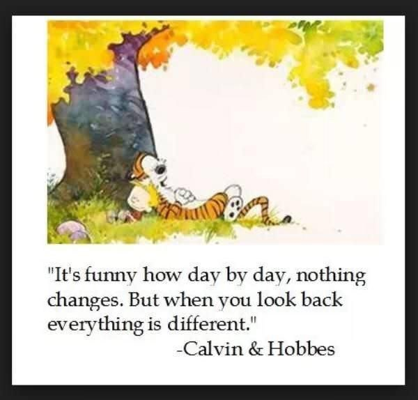 "Cartoon - ""It's funny how day by day, nothing changes. But when you look back everything is different."" Calvin & Hobbes"