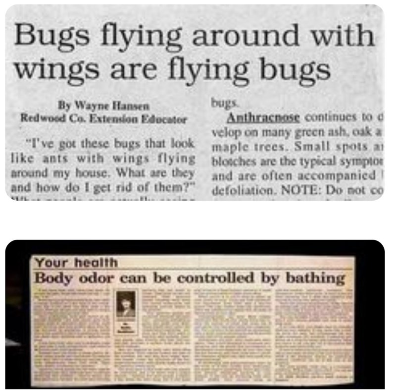 "funny headlines - Text - Bugs flying around with wings are flying bugs bugs Anthracnose continues to d velop on many green ash, oak a maple trees. Smalll spots a blosches are the typical symptor and are often accompanied defoliation. NOTE: Do not co By Wayne Hansen Redwood Co. Extension Edocator ""I've got these bugs that look like ants with wings flying around my house. What are they and how do I get rid of them?"" Your health Body odor can be controlled by bathing"