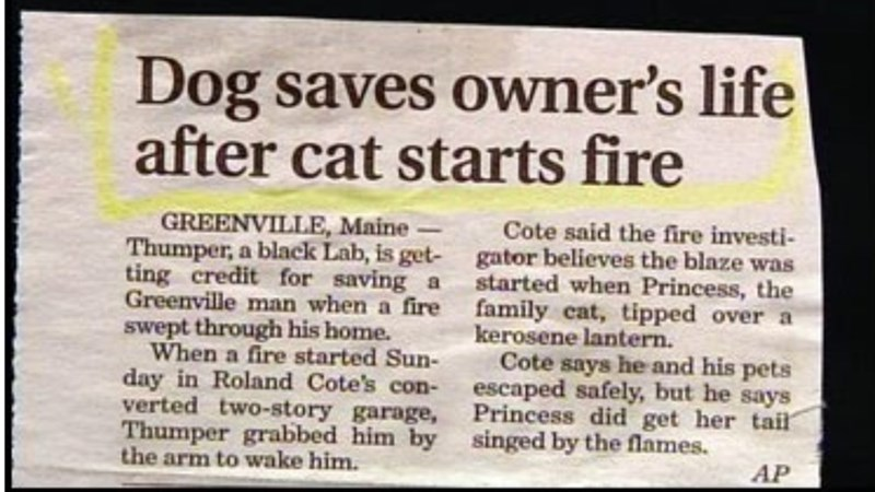 Text - Dog saves owner's life after cat starts fire GREENVILLE, Maine- Thumper, a black Lab, is get- ting credit for saving a Greenville man when a fire swept through his home. When a fire started Sun- day in Roland Cote's con- verted two-story garage, Thumper grabbed him by the arm to wake him. Cote said the fire investi- gator believes the blaze was started when Princess, the family cat, tipped over a kerosene lantern. Cote says he and his pets escaped safely, but he says Princess did get her