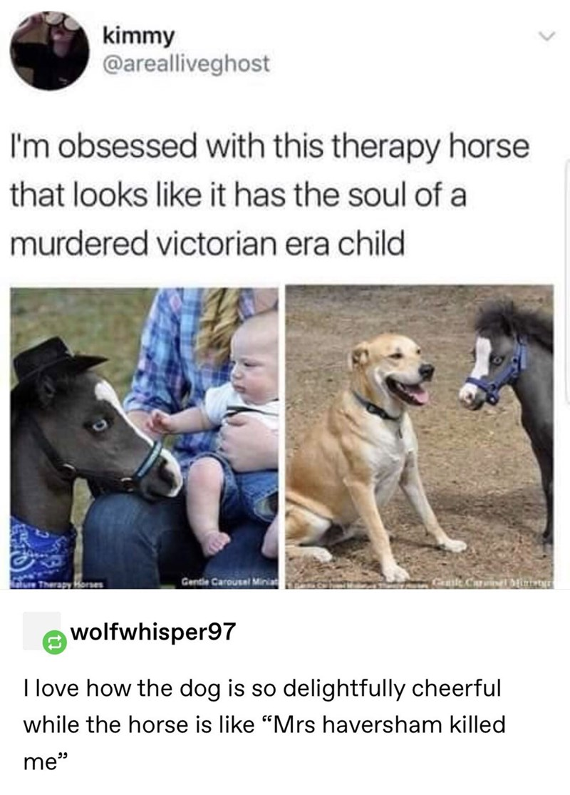 """stupid posts - Canidae - kimmy @arealliveghost I'm obsessed with this therapy horse that looks like it has the soul of a murdered victorian era child Gentle Carousel Miniat lurTherapy Horses wolfwhisper97 I love how the dog is so delightfully cheerful while the horse is like """"Mrs haversham killed ה me"""""""