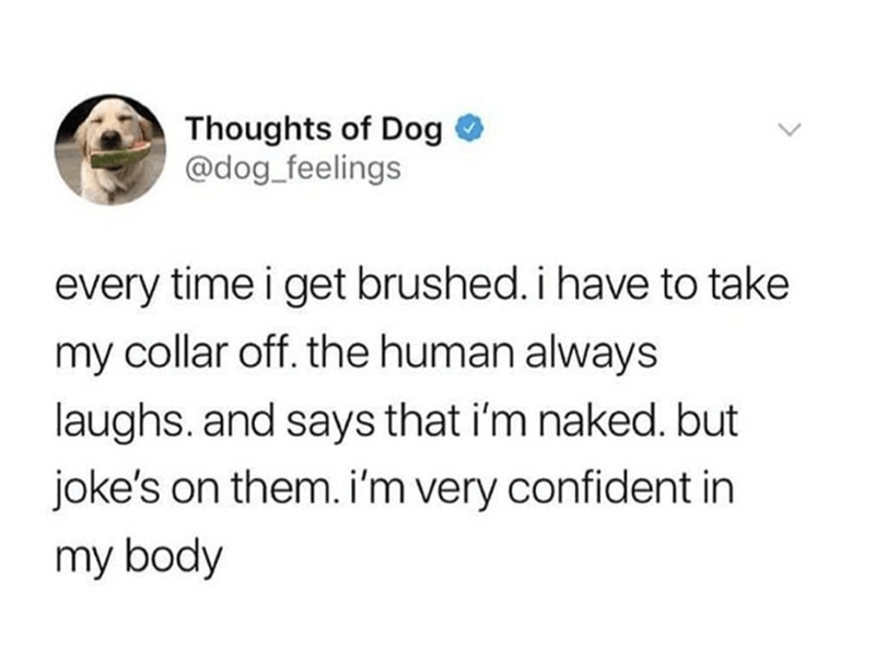 """Funny tweet from Thoughts of Dog that reads, """"Every time I get brushed. I have to take my collar off. The human always laughs. And says that I'm naked. But joke's on them. I'm very confident in my body"""""""