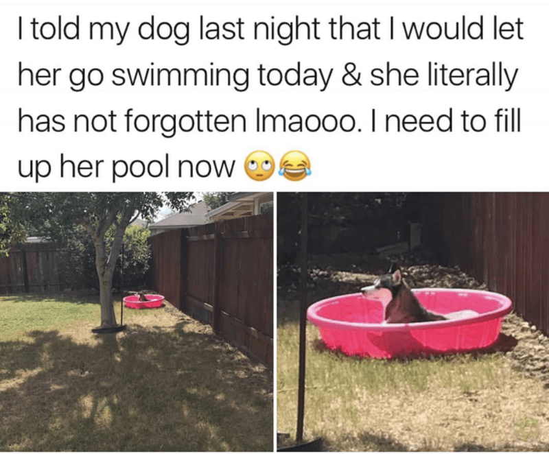 "Caption that reads, ""I told my dog last night that I would let her go swimming today and she literally has not forgotten lmaooo. I need to fill up her pool now"" above a photo of a cute husky sitting in a kiddie pool"