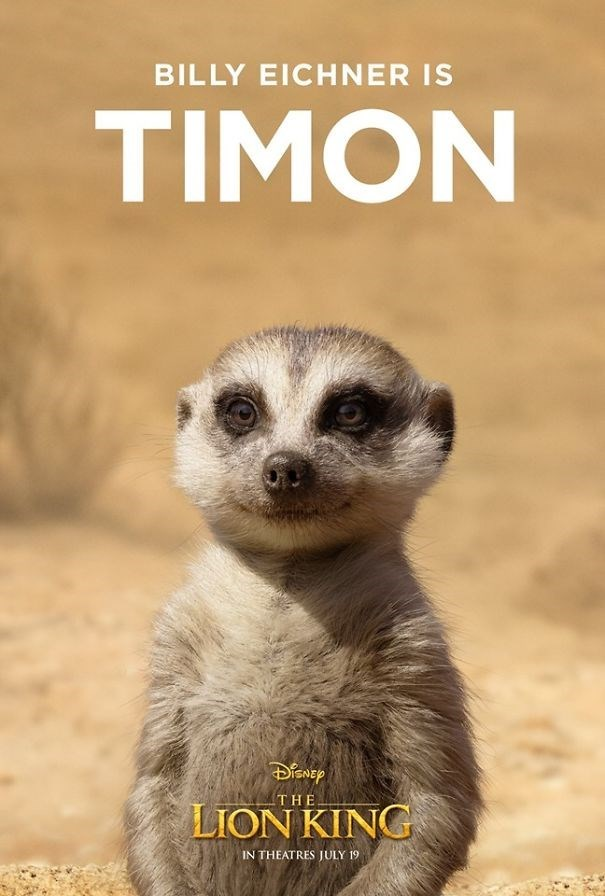 Meerkat - BILLY EICHNER IS TIMON THE LION KING IN THEATRES JULY 19