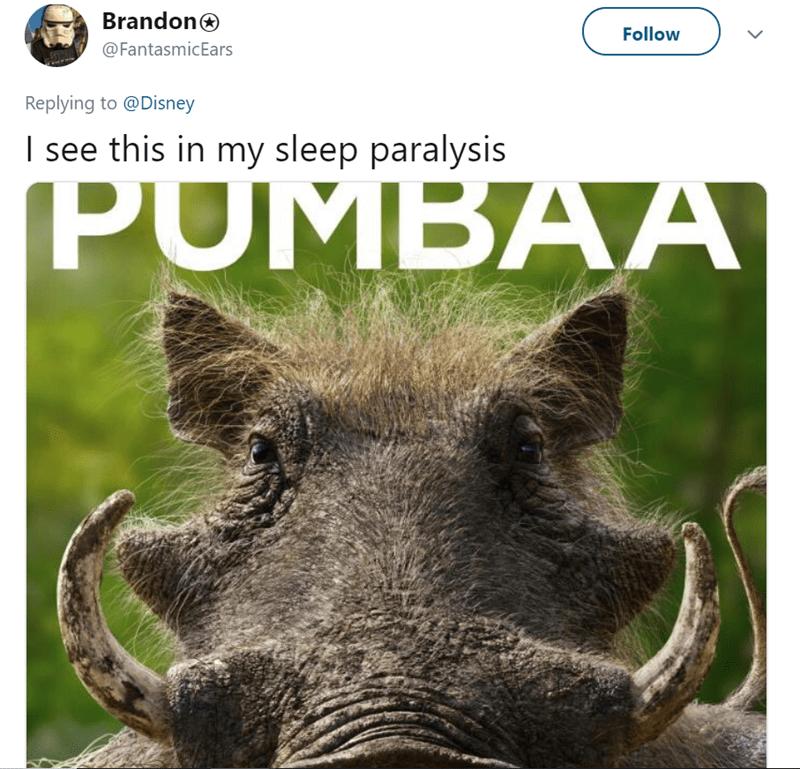 Wildlife - Brandon Follow @FantasmicEars Replying to @Disney I see this in my sleep paralysis PUMBAA