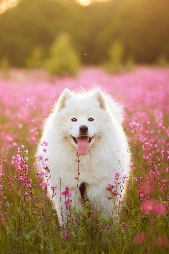 fluffy white - Mammal