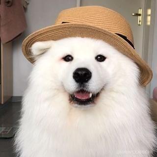 fluffy white - Dog