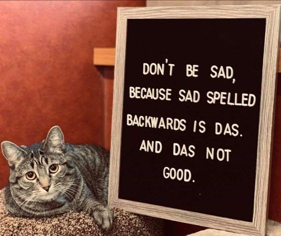 wholesome meme - Cat - DON'T BE SAD, BECAUSE SAD SPELLED BACKWARDS IS DAS. AND DAS NOT GOOD.