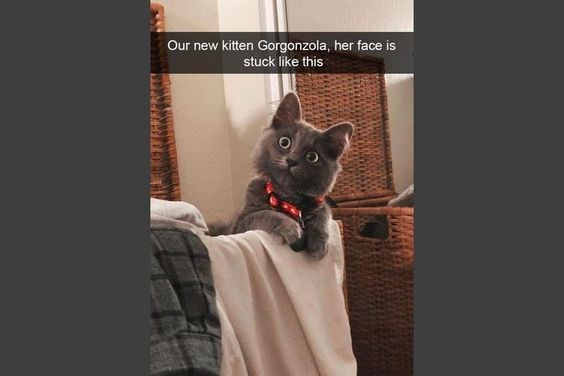 wholesome meme - Cat - Our new kitten Gorgonzola, her face is stuck like this