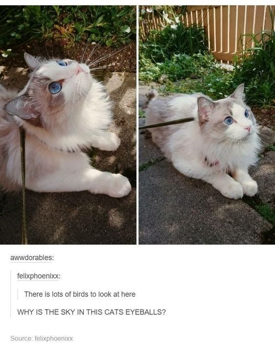 wholesome meme - Cat - awwdorables: felixphoenixx: There is lots of birds to look at here WHY IS THE SKY IN THIS CATS EYEBALLS? Source: felixphoenixx
