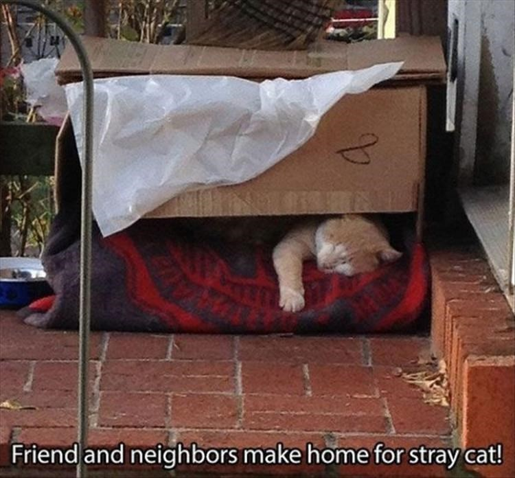 wholesome meme - Cat - Friend and neighbors make home for stray cat!