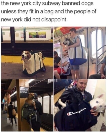 wholesome meme - Shoulder - the new york city subway banned dogs unless they fit in a bag and the people of new york did not disappoint nkin Avenue Clurmpion
