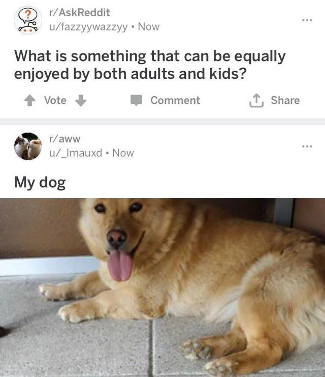 wholesome meme - Mammal - r/AskReddit ? u/fazzyywazzyy Now What is something that can be equally enjoyed by both adults and kids? Share Vote Comment r/aww u/_Imauxd Now My dog