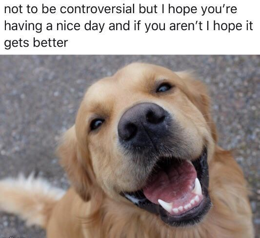 wholesome meme - Dog - not to be controversial but I hope you're having a nice day and if you aren't I hope it gets better