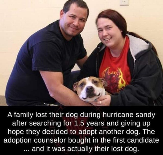 wholesome meme - Facial expression - A family lost their dog during hurricane sandy after searching for 1.5 years and giving up hope they decided to adopt another dog. The adoption counselor bought in the first candidate . and it was actually their lost dog.