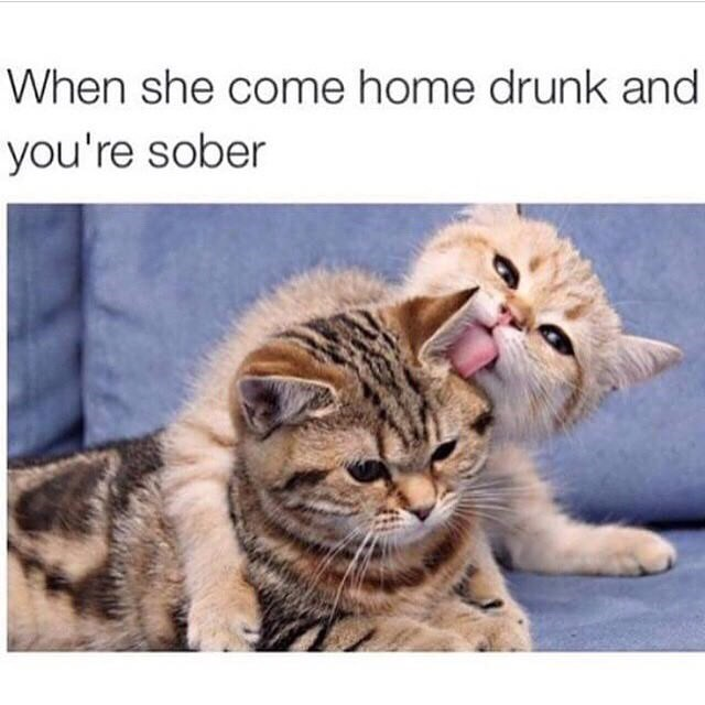 cat meme about when the girl is all drunk and thirsty when she comes home