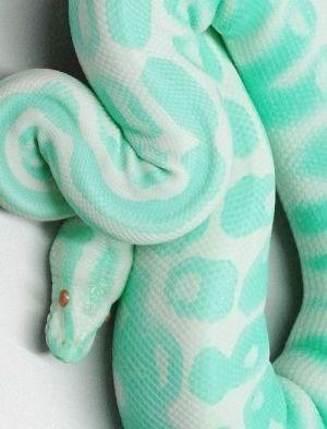 green pastel snake