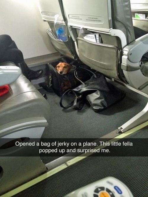 dogs on planes - snapchat of a dog peeking out from a bag on an airplane