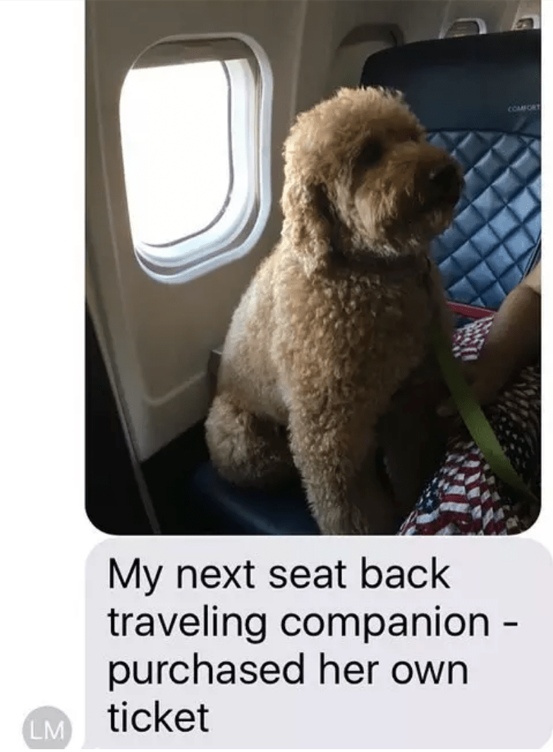 Dog - COMFCRT My next seat back traveling companion - purchased her own ticket LM