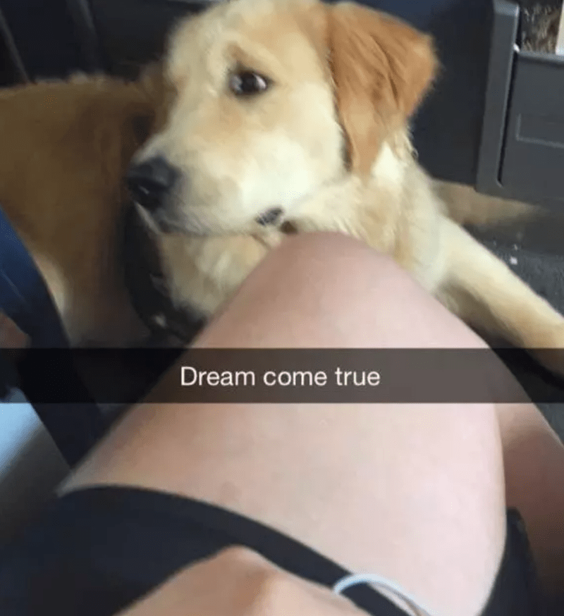 Dog - Dream come true