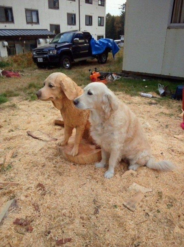 animal memes - pic of dog sitting next to identical dog made of wood