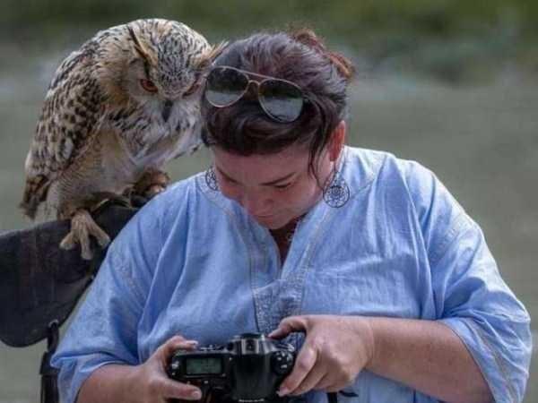 animal memes - Owl