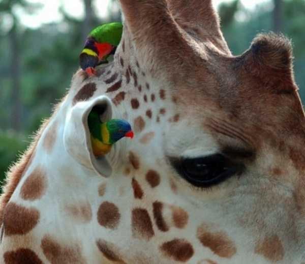 animal memes - Giraffe
