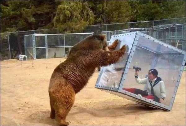 animal memes - Brown bear