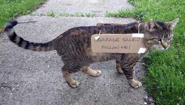 animal memes - Cat - GARAGE SALE FOLLON ME