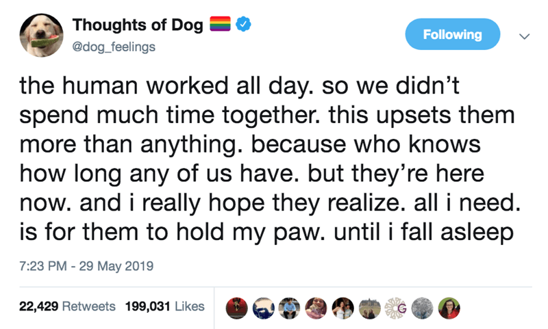 Text - Thoughts of Dog Following @dog_feelings the human worked all day. so we didn't spend much time together. this upsets them more than anything. because who knows how long any of us have. but they're here now. and i really hope they realize. all i need. is for them to hold my paw. until i fall asleep 7:23 PM - 29 May 2019 22,429 Retweets 199,031 Likes