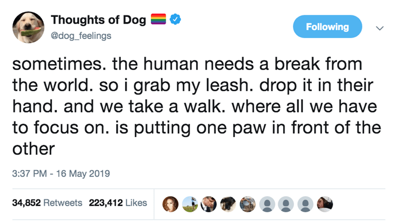 Text - Thoughts of Dog Following @dog_feelings sometimes. the human needs a break from the world. so i grab my leash. drop it in their hand. and we take a walk. where all we have to focus on. is putting one paw in front of the other 3:37 PM 16 May 2019 34,852 Retweets 223,412 Likes