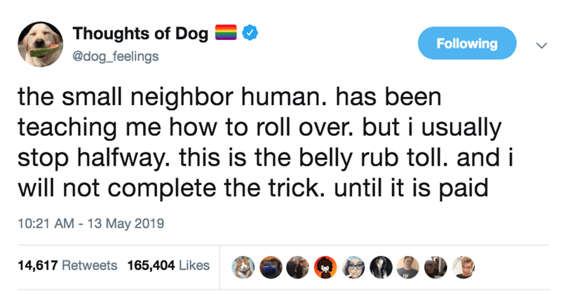 Text - Thoughts of Dog Following @dog_feelings the small neighbor human. has been teaching me how to roll over. but i usually stop halfway. this is the belly rub toll. and i will not complete the trick. until it is paid 10:21 AM 13 May 2019 14,617 Retweets 165,404 Likes
