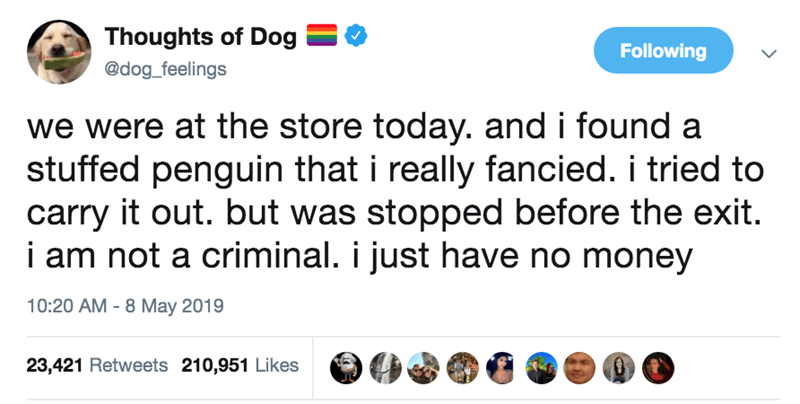 Text - Thoughts of Dog Following @dog_feelings we were at the store today. and i found a stuffed penguin that i really fancied. i tried to carry it out. but was stopped before the exit. i am not a criminal. i just have no money 8 May 2019 10:20 AM 23,421 Retweets 210,951 Likes